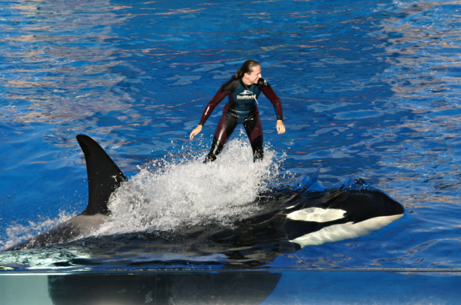SeaWorld Refusing to Free Dead Whale