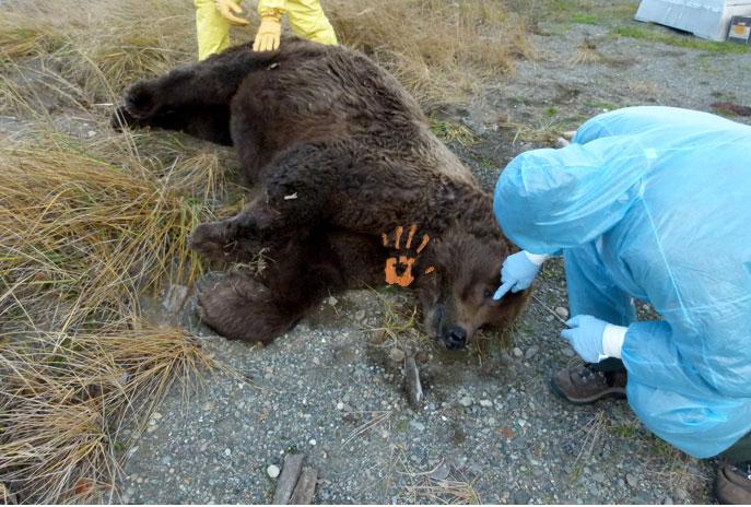 President-Trump-Has-Strangled-a-Bear-Cub-to-Death-on-the-North-Lawn